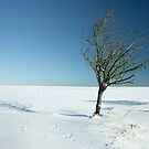 Cold & Alone. by Kit347