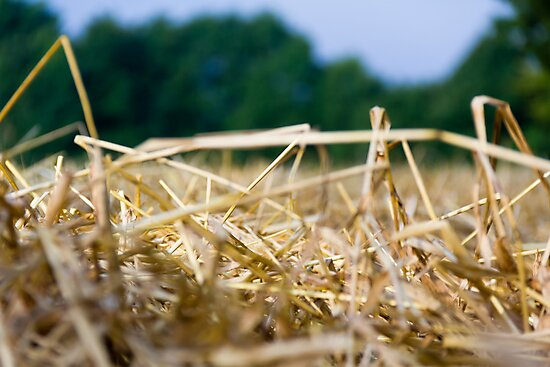 Harvest Time 4 by stay-focussed