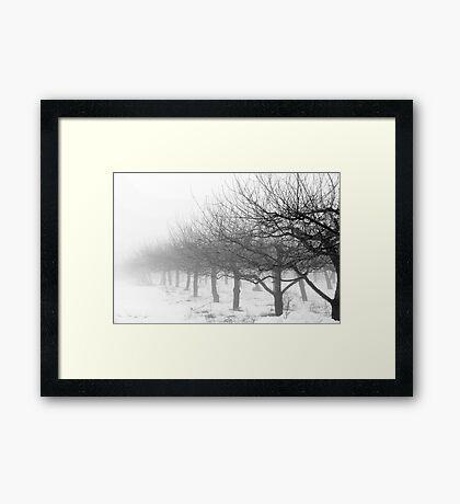 Apple Trees in Winter Framed Print