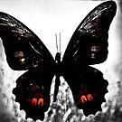 Mariposas tres #2 by Veroniquecz