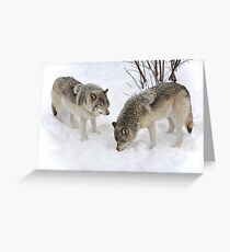 Wolves : The Widsom of Snow Greeting Card