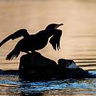 Pot-Belly Cormorant by toby snelgrove  IPA
