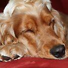 Jessie Asleep by aussiebushstick