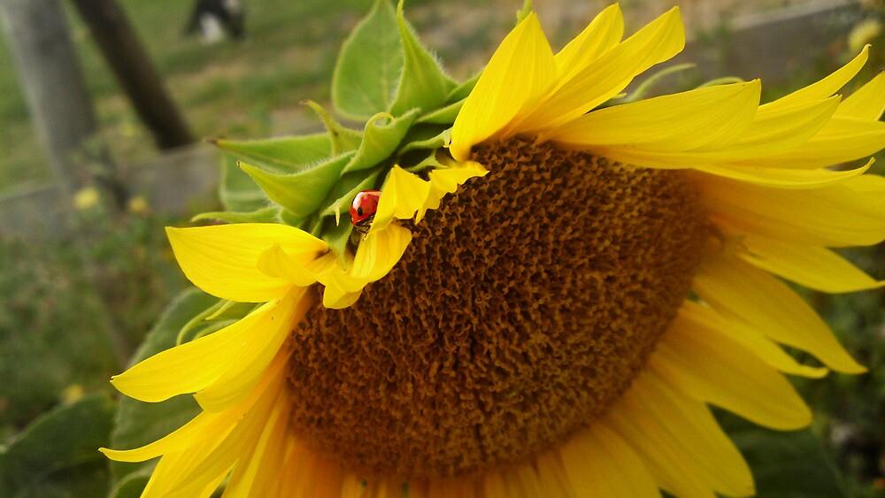 Sunflower & Ladybird by XeniaMay-