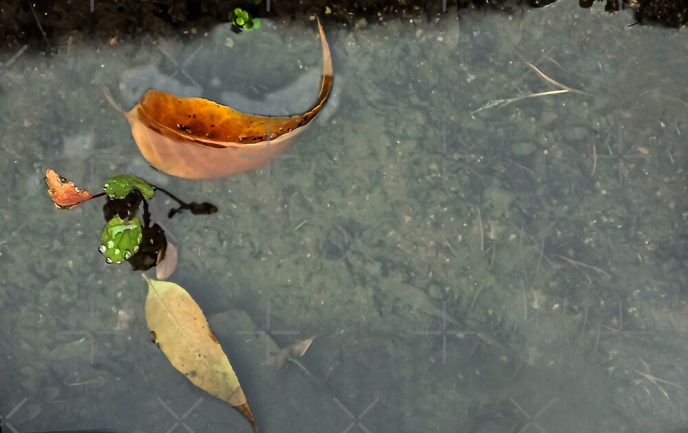 After the Rain...Puddles by Heather Friedman
