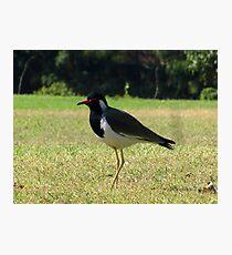 Bird 'O' Bird ;) Photographic Print