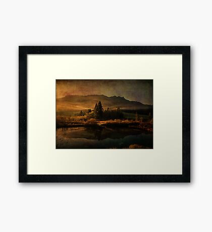 Scent of Pines Framed Print