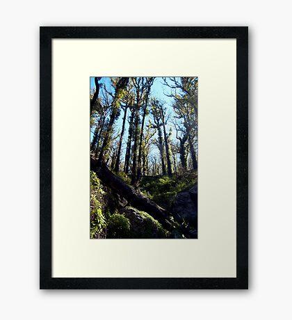 untitled #51 Framed Print