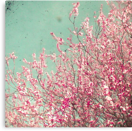 Blossom by Cassia Beck