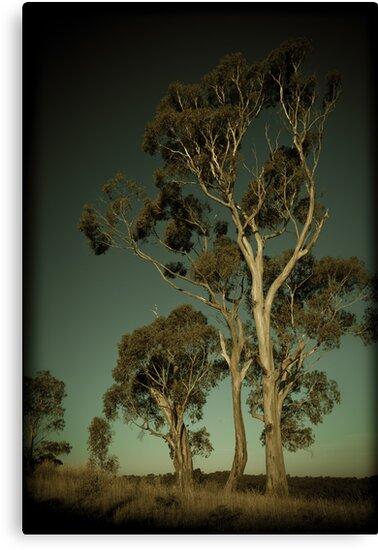 Eucalyptus by Andrew Wilson