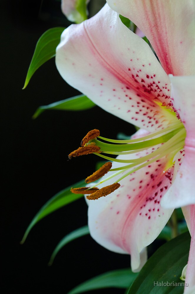 Lily Garden by Halobrianna