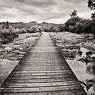 Thermal Boardwalk, Rotorua by Dilshara Hill