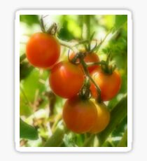 Red Cherry Tomatoes On The Vine Sticker