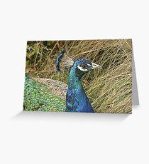 ~Peacock~ Greeting Card