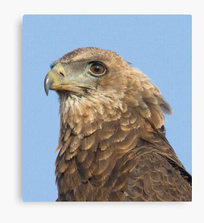 Juvenile Bateleur Eagle Canvas Print