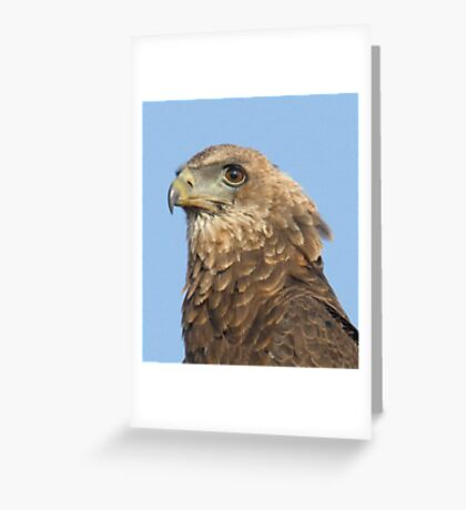 Juvenile Bateleur Eagle Greeting Card