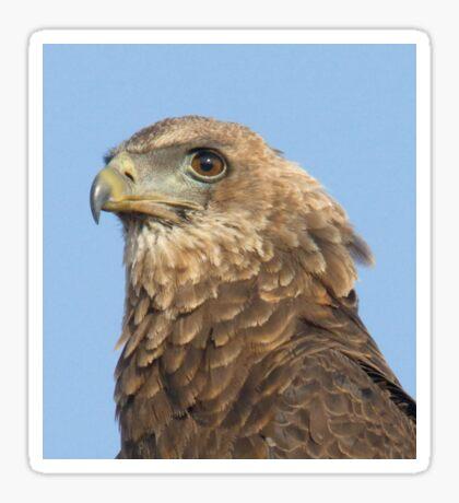 Juvenile Bateleur Eagle Sticker