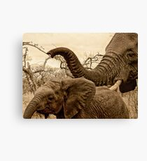 Mommys boy Canvas Print
