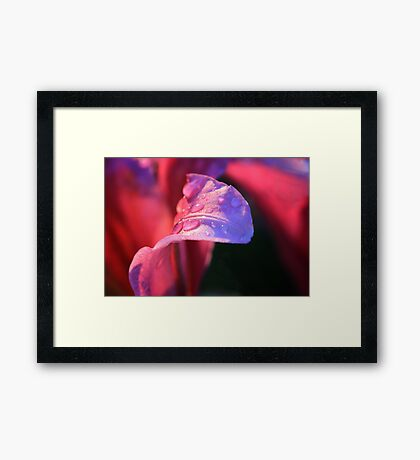 Tongue hanging out for a drink.. Framed Print