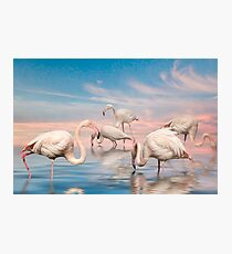 Flamingo Lagoon Photographic Print