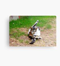 the yogic cat Metal Print