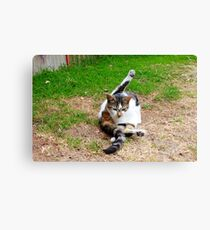 the yogic cat Canvas Print