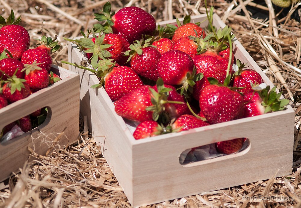 a box of strawberries by Anne Scantlebury