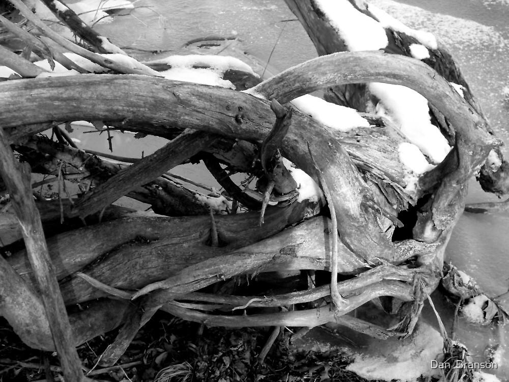 Snowy Beach Wood by Dan  Branson