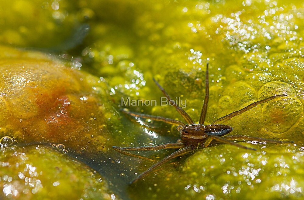 spider in the bubbles by Manon Boily