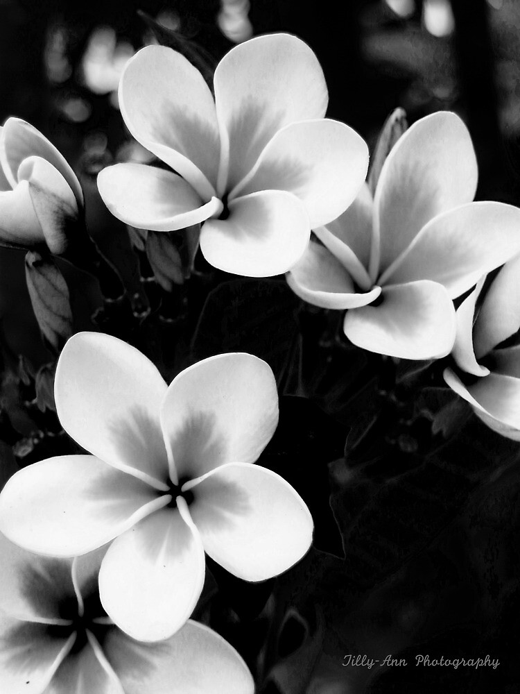 Black and White Frans by lisaann1991