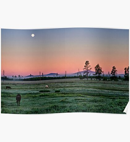 Horses at Sunrise Poster
