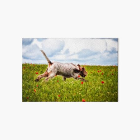 Galloping in poppies Spinone Art Board Print