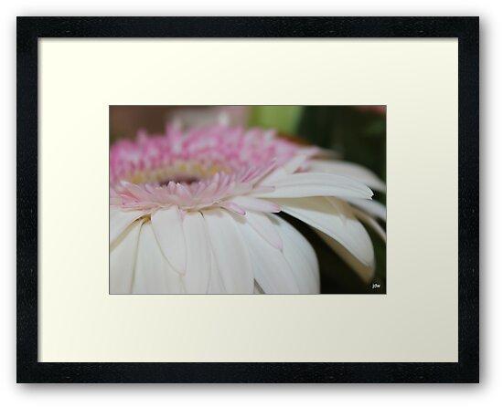 petals and petals by Jeannine de Wet