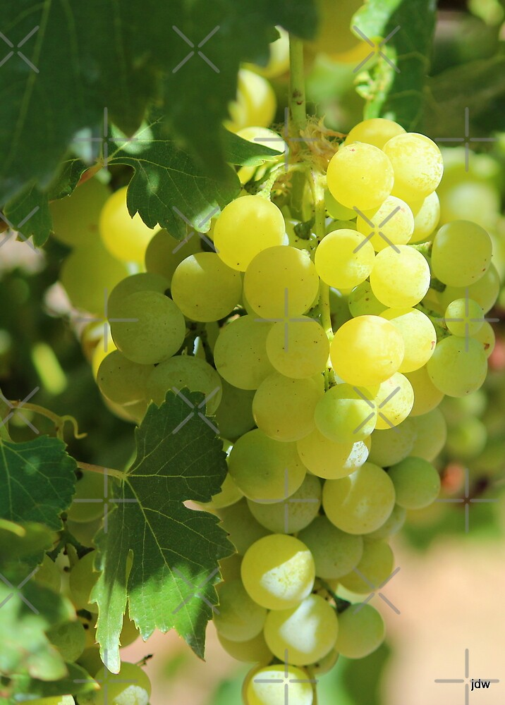 grapes ready for picking by Jeannine de Wet