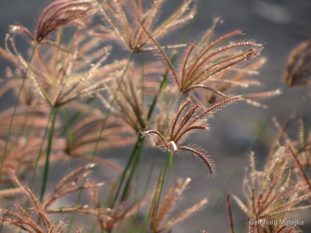 It Is Only Grass - Es Solo Hierba by Bernhard Matejka