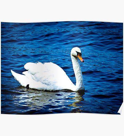 White Swan  VRS2 Poster
