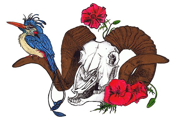 The Ram skull and bird in colour by kirstenmcnee