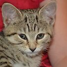Ella the cat :) by Jemma Richards