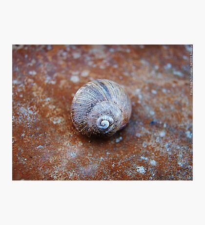 Snail House  VRS2 Photographic Print