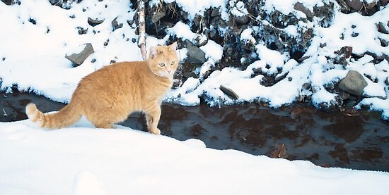 Lily loves the snow. by Penny Rinker