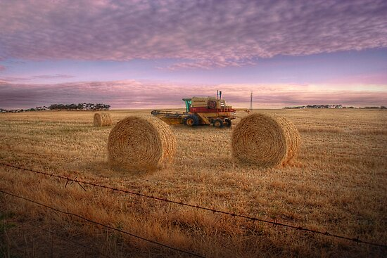 Make Hay While The Sun Shines - Murray Bridge, South Australia by Mark Richards