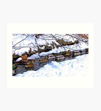 Getting My Ducks in a Row Art Print