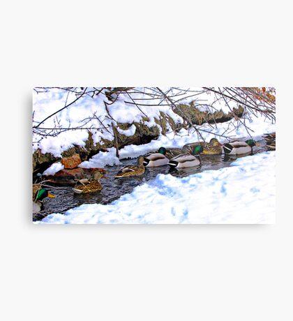 Getting My Ducks in a Row Metal Print