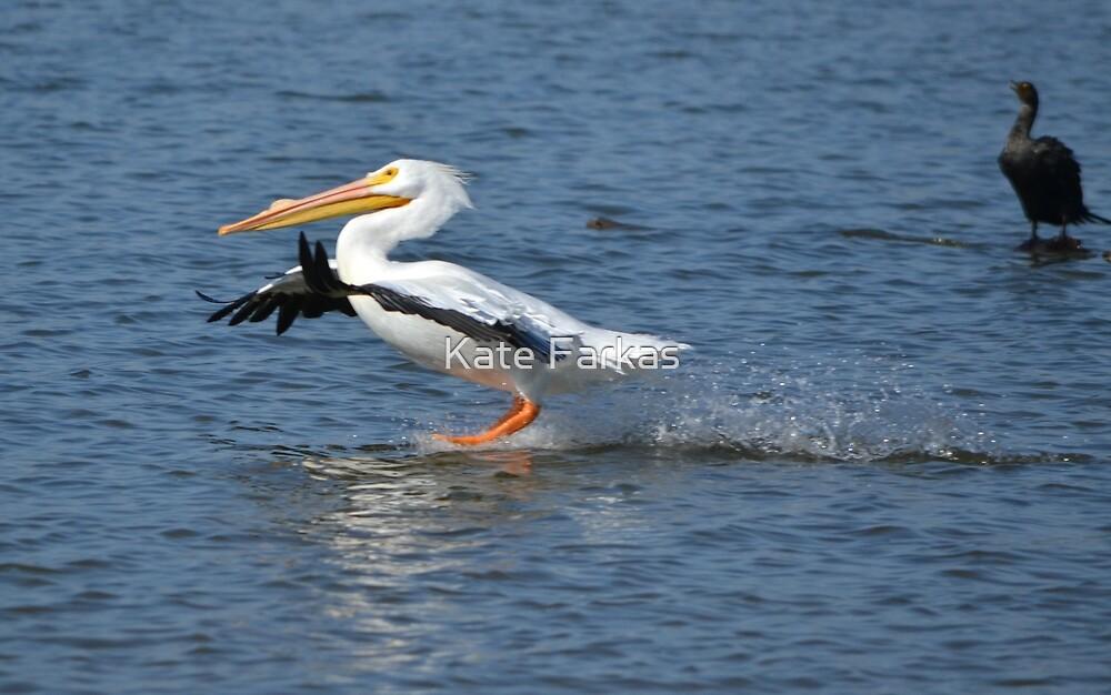 White Pelican Landing by Kate Farkas