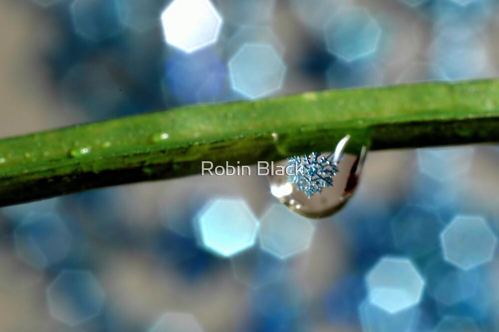 Winter Shimmer by Robin Black