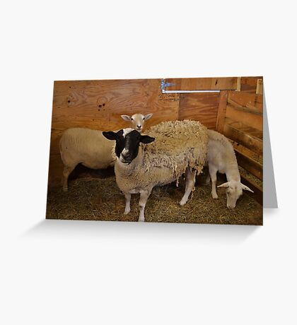 Attentive  Greeting Card