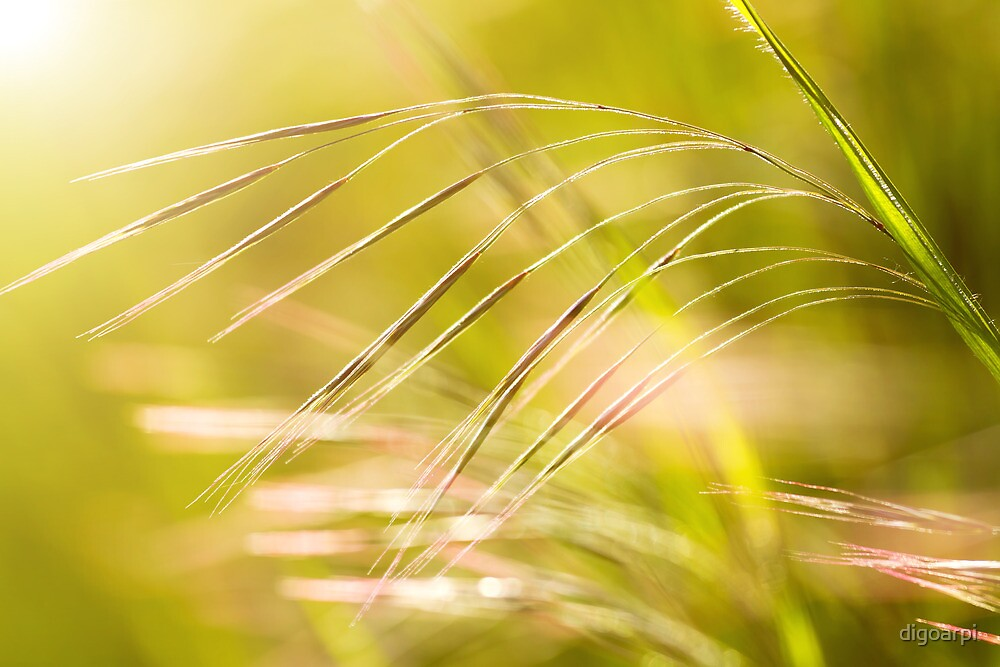 Grassland by digoarpi