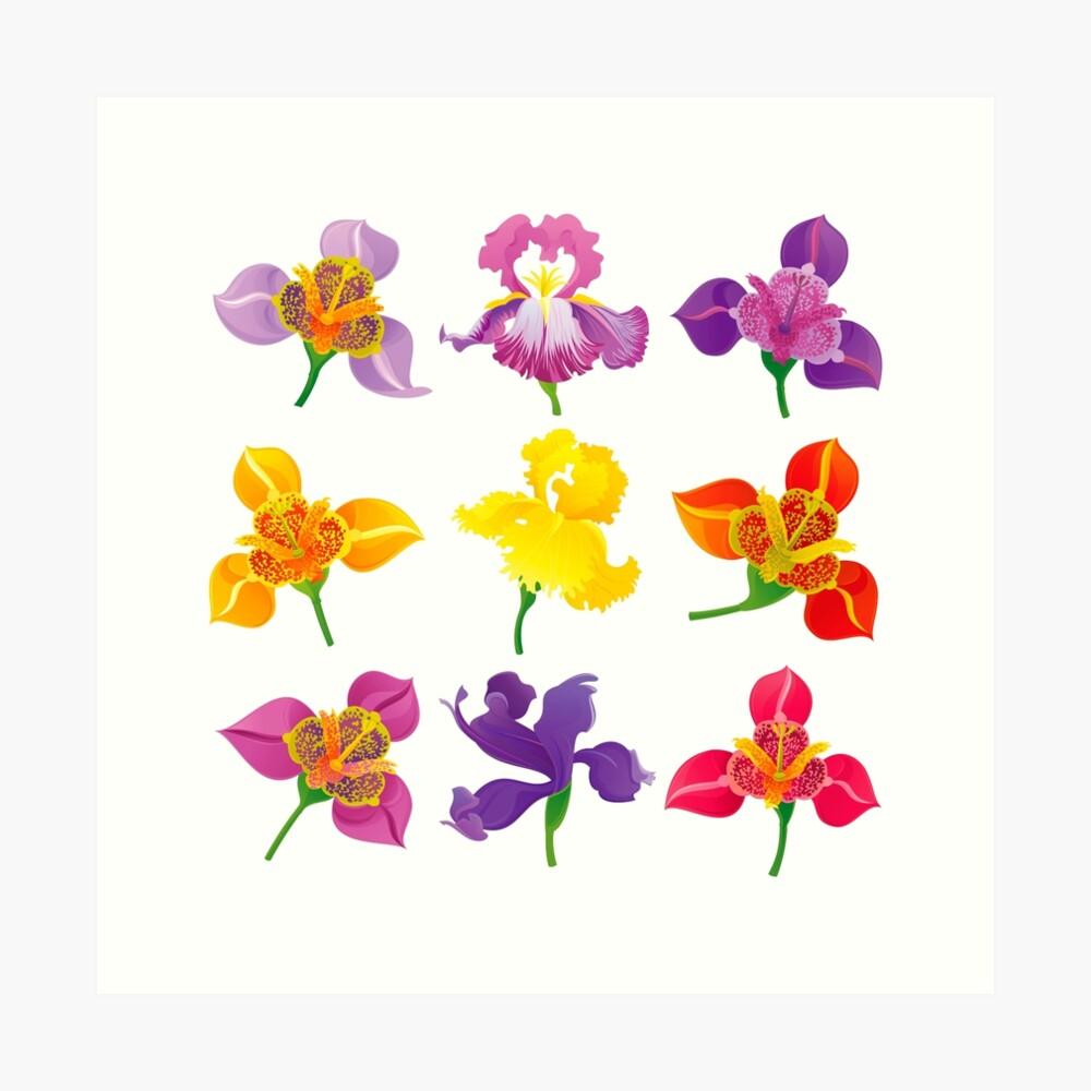 Tigridia & Iris Art Print