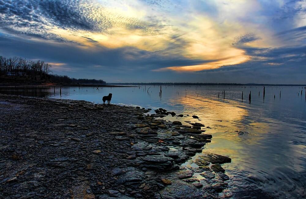 Sunset, Shoreline And Sammy by Carolyn  Fletcher