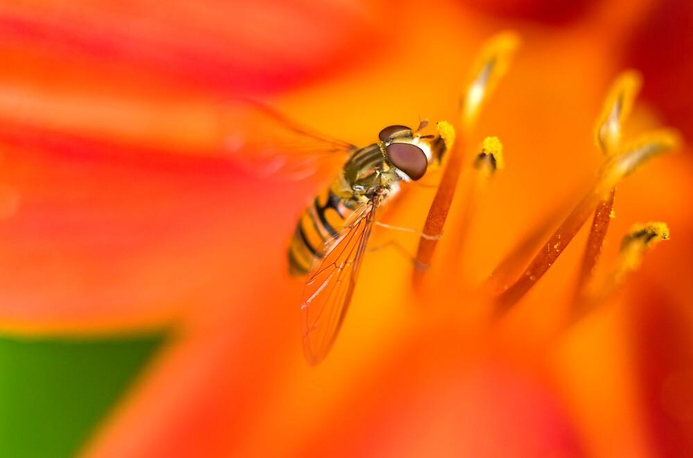 The Beauty of Orange by Micha Dijkhuizen